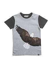 Raven - EAGLE
