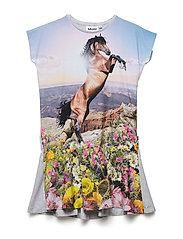 Caeley - MOUNTAIN HORSE