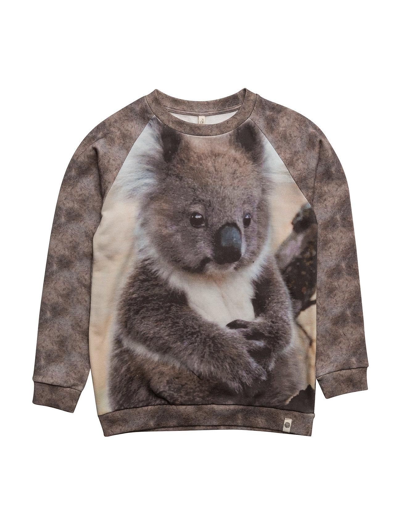 Basic Sweat Koala Popupshop  til Børn i