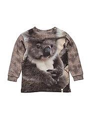 Baby Sweat Koala - KOALA